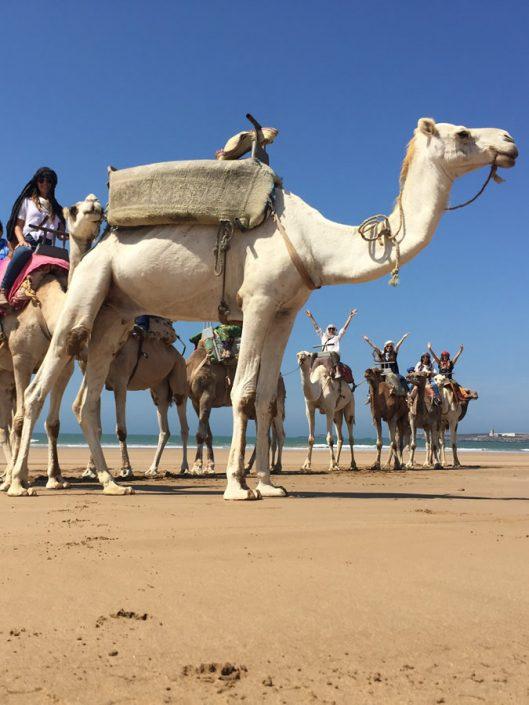 Camel Caravan at Essaouira, Morocco